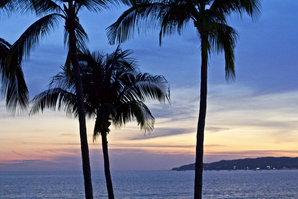 Palm trees in front of the sun setting over the ocean